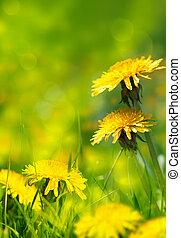bonito, primavera, flores, fundo