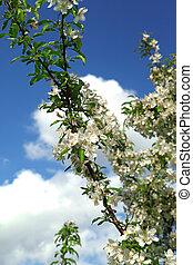 bonito, primavera, florescer, árvore