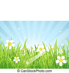 bonito, primavera, prado