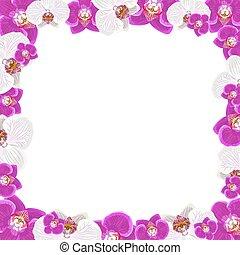 bonito, quadro, isolado, saudação, fundo, convite, flores brancas, orquídea, ou, cartão, design.