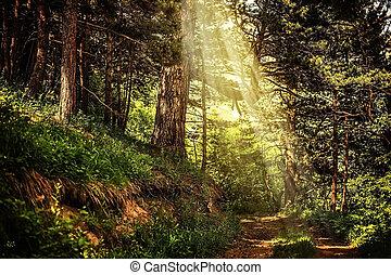 bonito, raios, magia, sol, arborize caminho