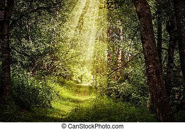 bonito, raios, ramos, sol, através, floresta, magia