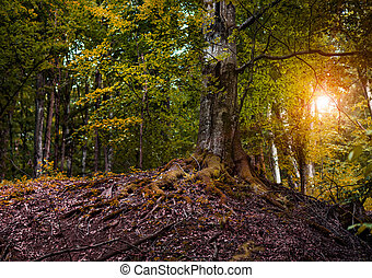 bonito, raios, sun., floresta