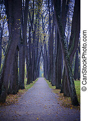 bonito, rastro, através, a, floresta outono