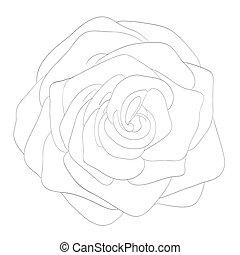 bonito, rosa, isolado, pretas, monocromático, branca, background.?