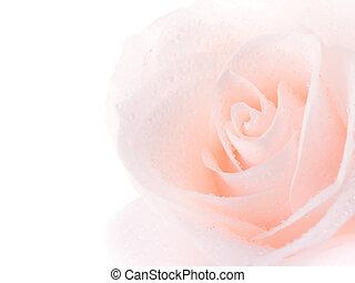 bonito, rosa, sobre, macio, branca