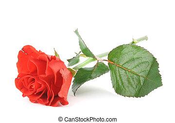 bonito, rosa, wh