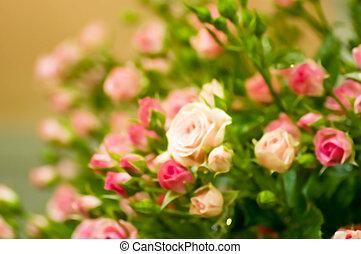 bonito, rosas cor-de-rosa