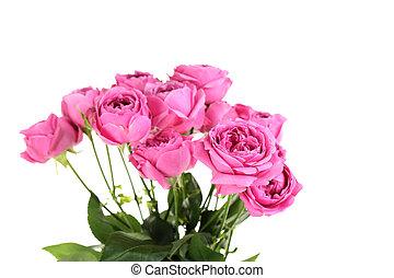 bonito, rosas cor-de-rosa, isolado, ligado, um, branca