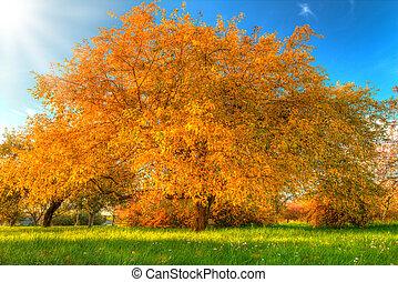 bonito, secos, folhas, árvore, outono, caído