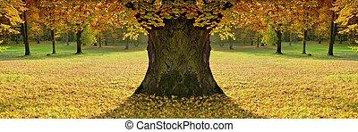 bonito, senhora, de, cor, outono, disposição