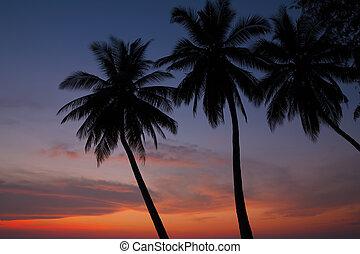 bonito, silhoette, árvores, tropicais, palma, pôr do sol
