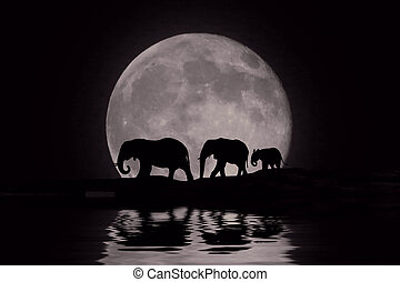bonito, silueta, de, elefantes africanos, em, moonrise