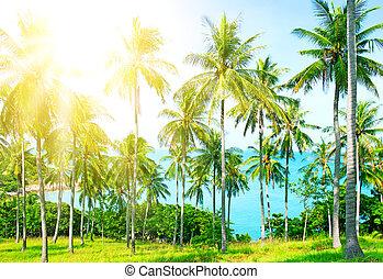 bonito, sobre, árvore, areia, praia palma