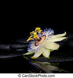 bonito, spa, armando, de, passiflora, flor, ligado, zen, pedras, com, re