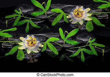 bonito, spa, conceito, de, passiflora, flor, e, verde, ramo, ligado, zen, pedras, com, reflexão, em, água, closeup