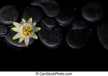bonito, spa, conceito, de, passiflora, flor, ligado, zen, pedras, com, re