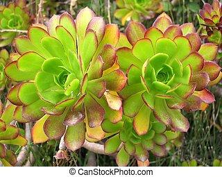 bonito, succulents
