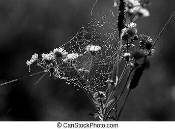 bonito, teia, aranha