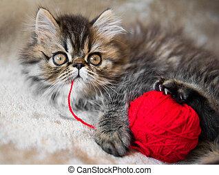 bonito, tricotando, fio, gato, persa, gatinho