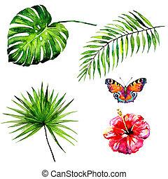 bonito, tropicais, folhas, borboletas, aquarela, palma