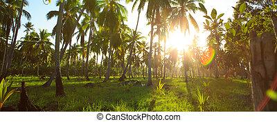 bonito, tropicais, pôr do sol, com, coqueiros, .