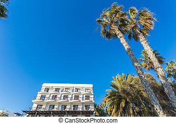 bonito, tropicais, palma, pôr do sol, árvores