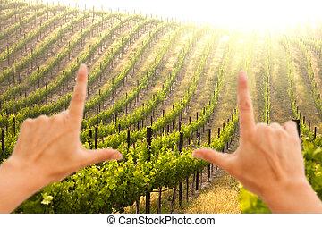 bonito, uva, luxuriante, vinhedo, formule, mãos