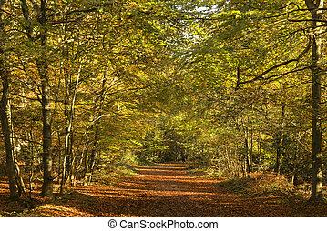bonito, vívido, dourado, outono, outono, floresta, paisagem