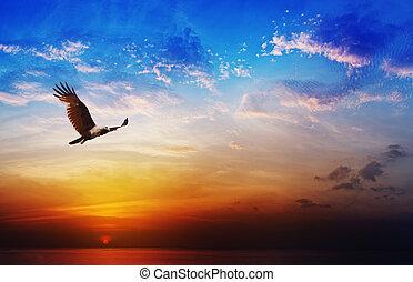 bonito, vôo, papagaio, -, presa, brahminy, fundo, pôr do sol, pássaro, mar, acima