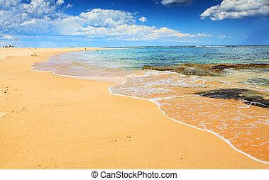 bonito, verão, australiano, praia