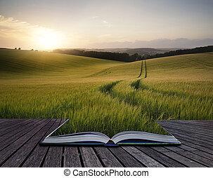 bonito, verão, conceito, trigo, colheita, criativo, campo, livro, pôr do sol, crescendo, durante, páginas, paisagem