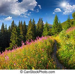 bonito, verão, paisagem, montanhas, com, cor-de-rosa, flowers.