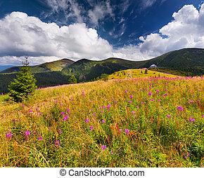 bonito, verão, paisagem, montanhas, com, flores côr-de-rosa