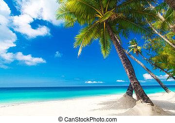 bonito, verão, praia., sobre, árvore, n, scene., areia, palma, branca, sonho