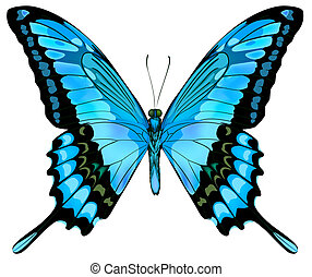 bonito, vetorial, isolado, azul, borboleta