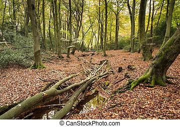 bonito, vibrante, outono, cores baixa, em, floresta, paisagem