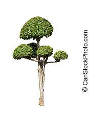 bonsai, árvores verdes, isolado, branco, fundo
