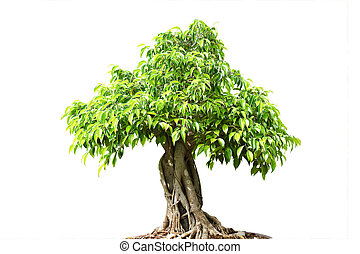 bonsai の 木, 背景, 隔離された, 緑の白