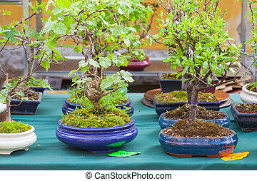 Bonsai arbres bonsai miniature arbre jardin photo de - Bonsai arbre prix ...
