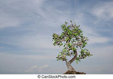 bonsai, arcszín, elszigetelt