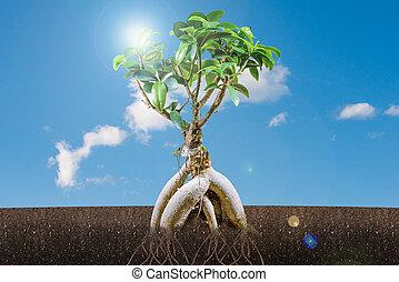 bonsai, blauwe , boompje, hemel, groei, duurzaam, concept:
