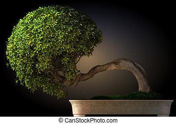 bonsai boom, zijaanzicht