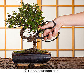 Bonsai cutting