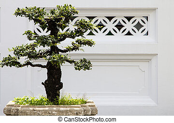 bonsai decorative tree