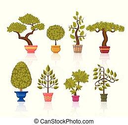 bonsai, decorativo, fiore, albero, set., otri, piante
