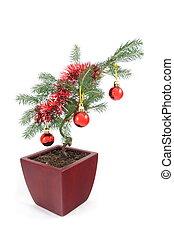 bonsai drzewo, boże narodzenie