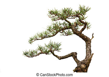 bonsai, estilo, informal, árbol, (part), vertical, blanco