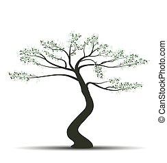 bonsai, feuilles, arbre