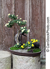 bonsai flower and tree in a ceramic pot